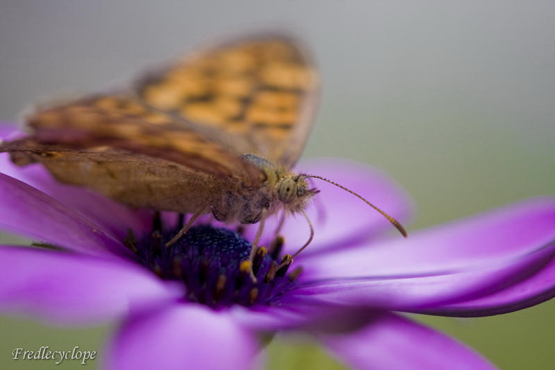 papillon très cool