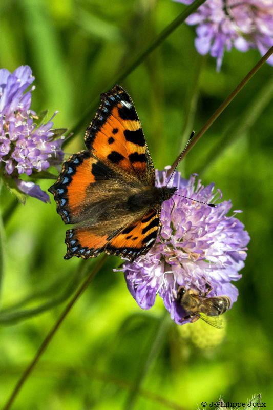 Papillons -