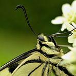 papillons portrait
