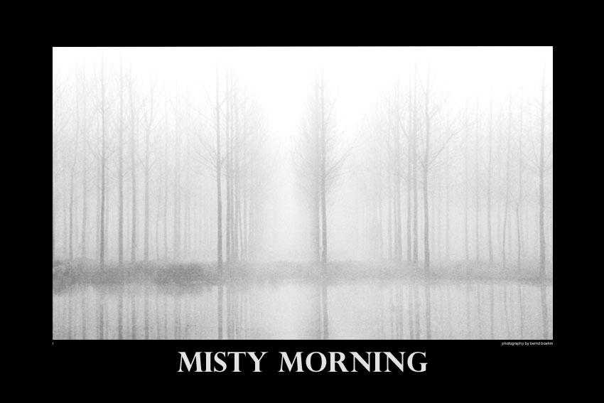 Pappeln im Nebel