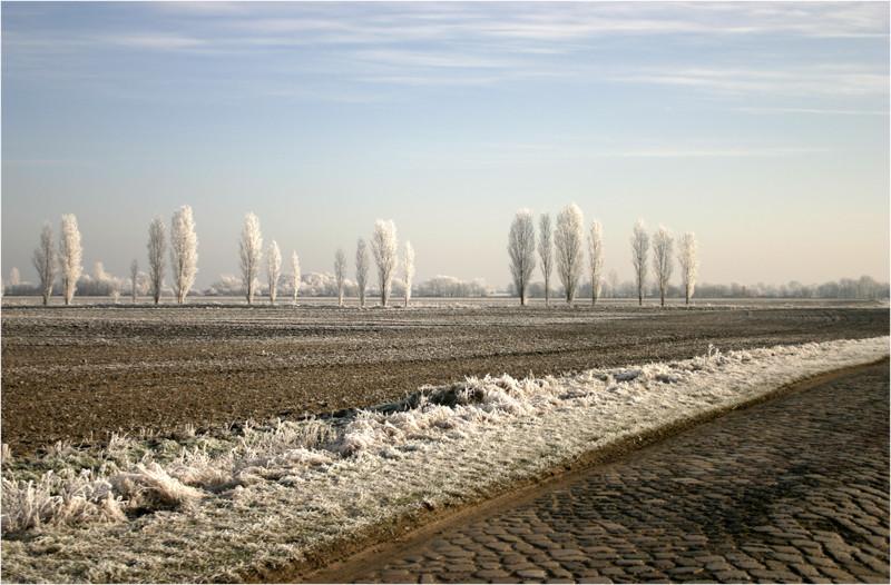 Pappeltoscana Winter