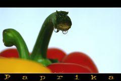 - Paprika -