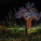 Paradiesbaum auf dem Erfurter Petersberg bei Nacht.