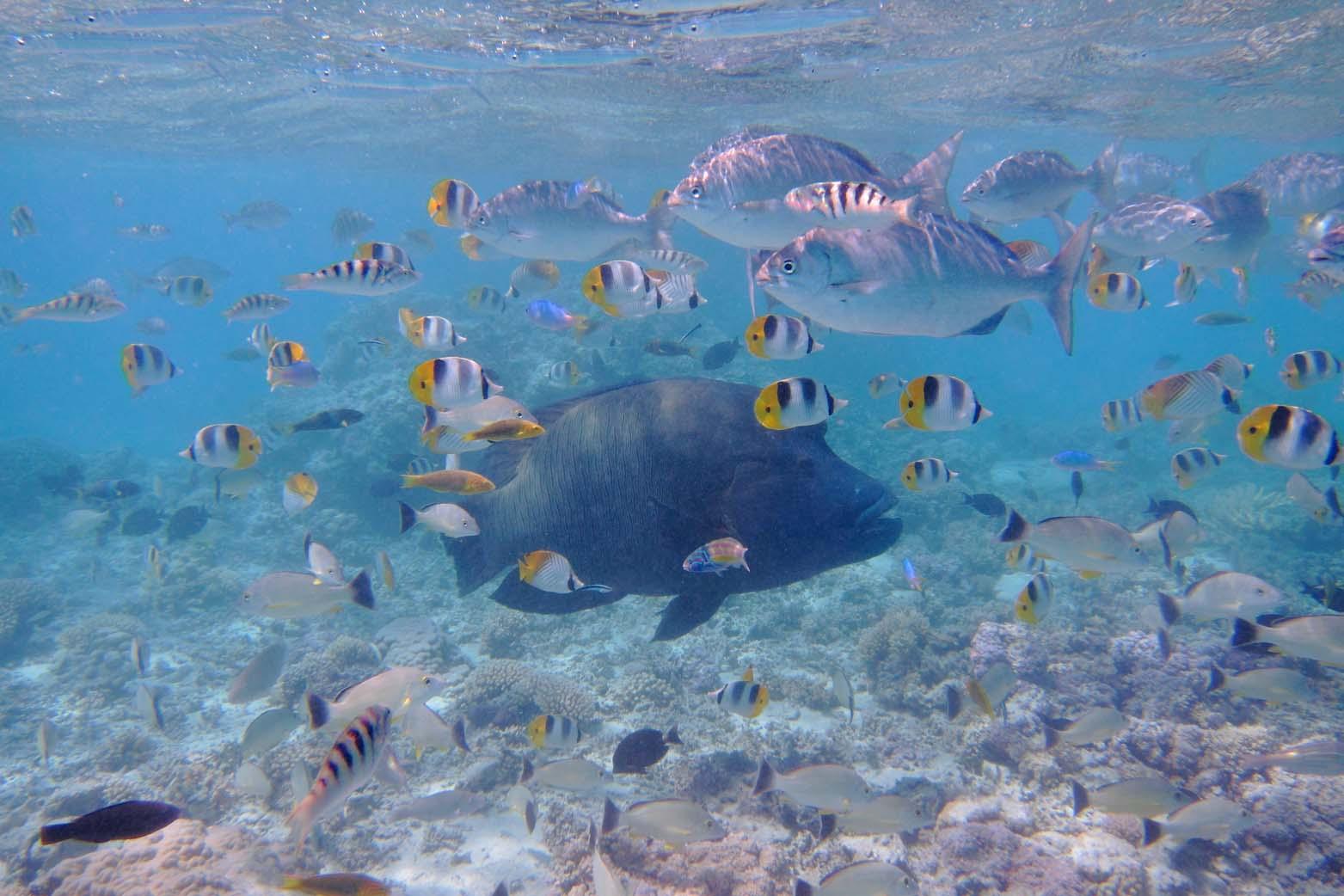 ¸.•*¨`* •Paradiesische Unterwasserwelt.•*¨`* •.¸