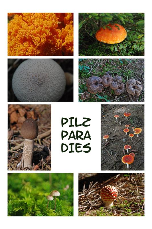Paradis des champignons