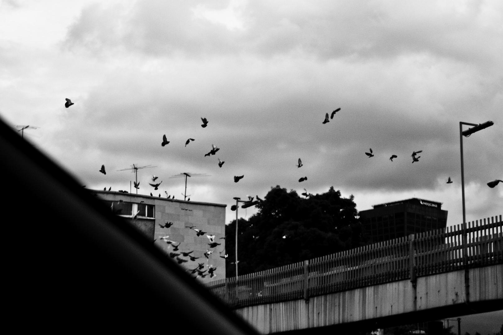 Parafernalia aviar