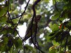 Parakeet at Kew Gardens