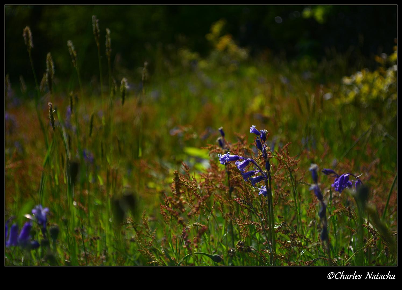 Parc Marguerite Yourcenar, mont noir photo et image | nature, fleurs ...