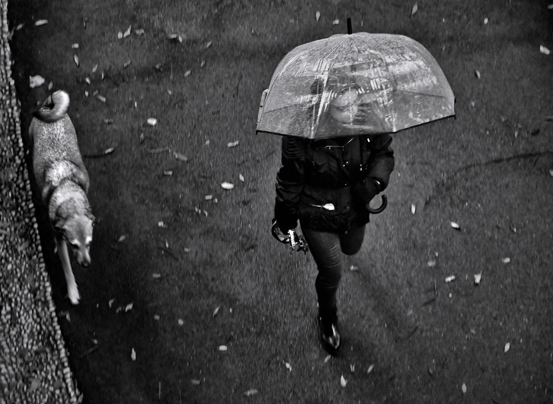 Parce que je n'ai pas un parapluie?