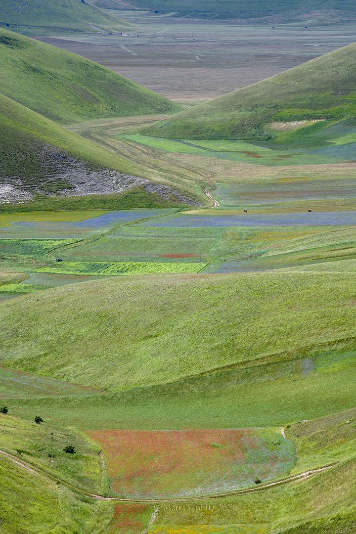 Parco dei monti Sibillini, fioritura delle lenticchie