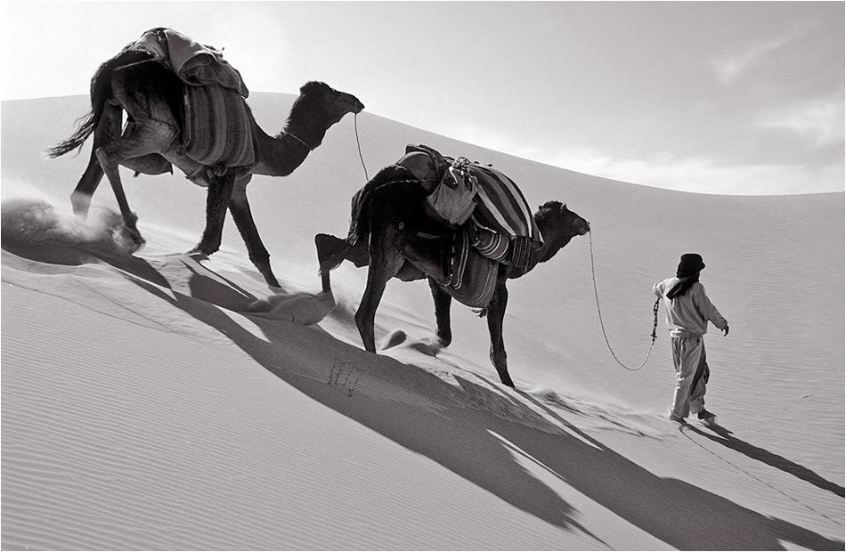 Parcours difficile - même pour des chameaux