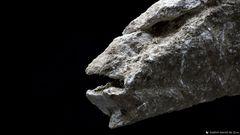 Pareidolia in Rock 20-13.1