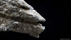Pareidolia in Rock 20-13.2
