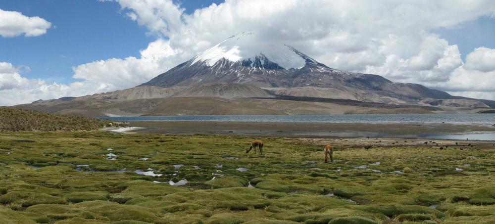 Parinacota im Norden Chiles