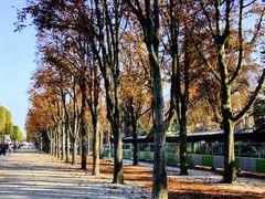 Paris d'Automne. 2