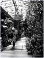 PARIS;Maison des Orchidées