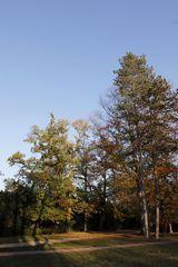 Park Luisium im Spätherbst - Bild 1