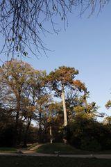 Park Luisium im Spätherbst - Bild 2
