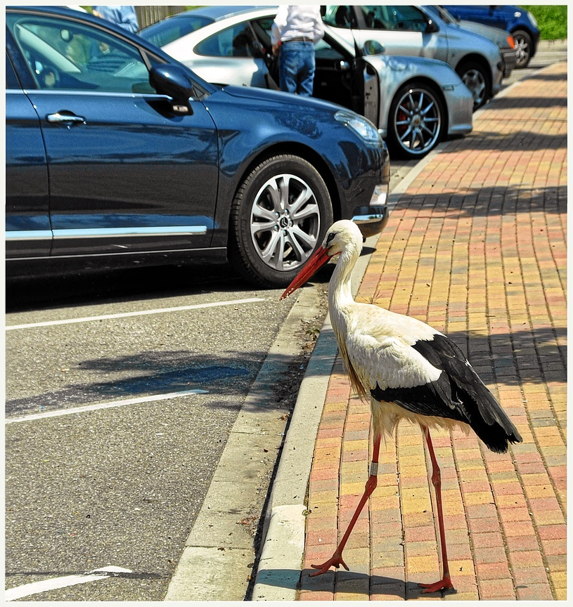 Parkplatzwächter