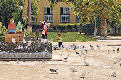 Parmi les pigeons et colombes