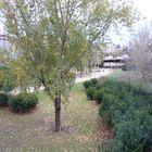 Parque de la Estaciòn del Norte. Barcelona. Diciembre del 2009.