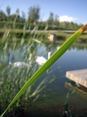 Parque del Agua Luis Buñuel, Zaragoza - El Lago de los Cisnes...
