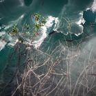 Parque Nacional Plitvice- Los peces