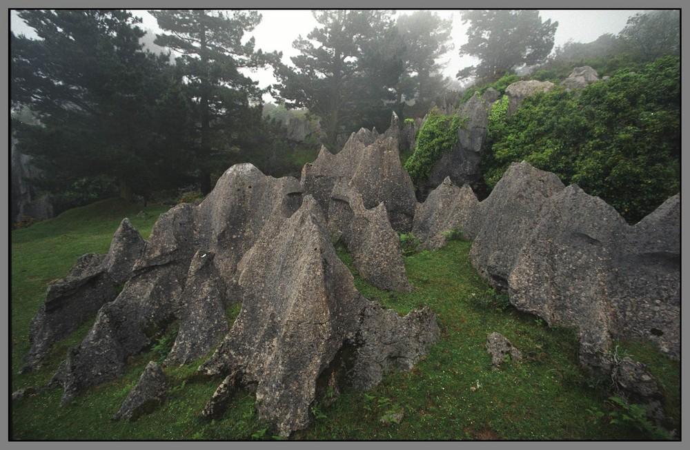Parque natural del Gorbea 4