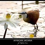 - parra africana -