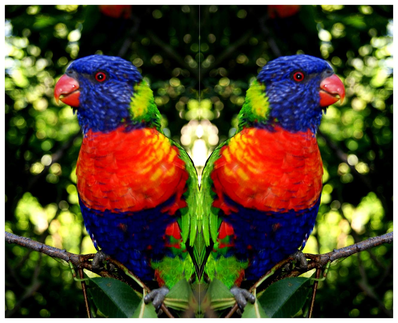 Parrot-
