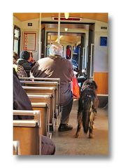 "part of the <picture> story... ""Man's best friend"" fahrt mit"