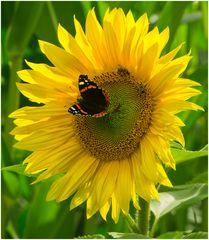 Party auf der Sonnenblume