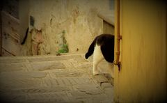 """""""pas vu ,pas pris"""" , pense le chat....."""