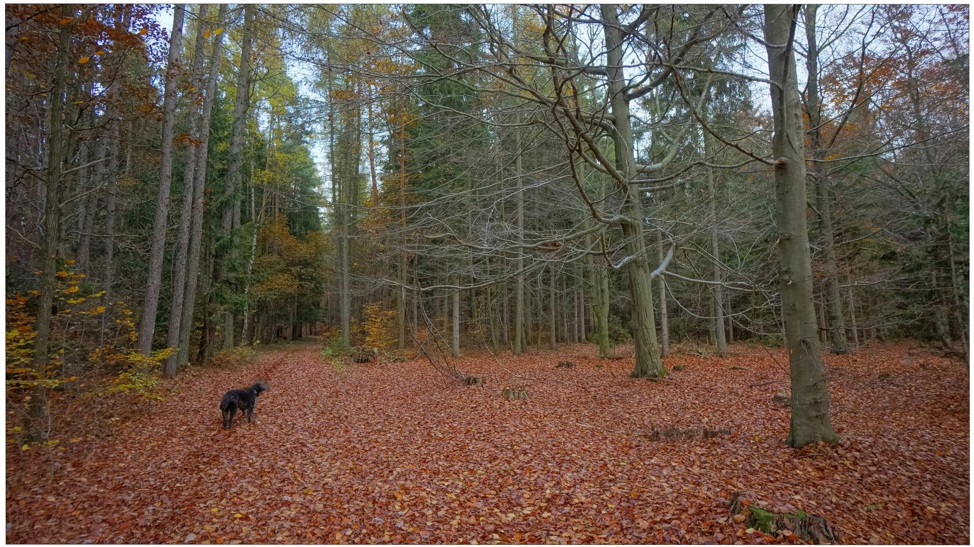 Paseando con Wicky-Emily por el bosque otoñal II (mit Wicky-Emily im Herbstwald II)