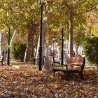 Paseando entre hojas.