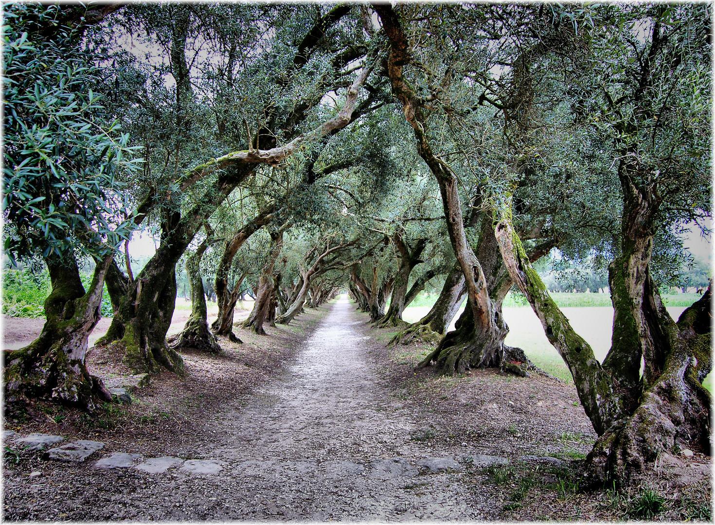 Paseo das Oliveiras