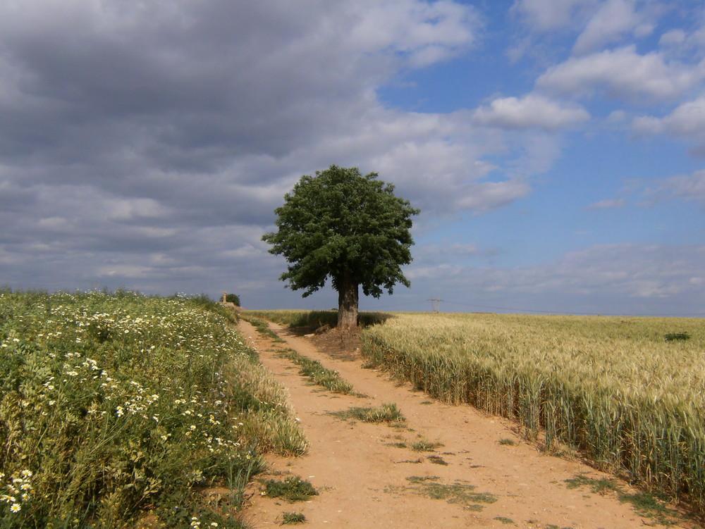 Paseo por el campo
