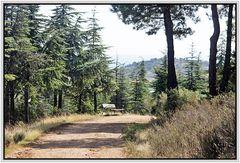 Paseo romántico por el bosque