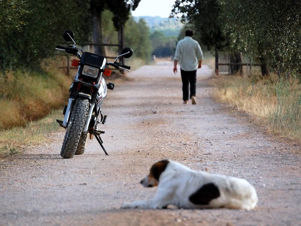 PASSEGGIATA IN CAMPAGNIA CON CANE E MOTO