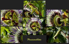 Passionsblüte