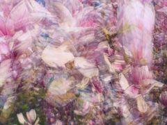 Pastel Magnolia Dream