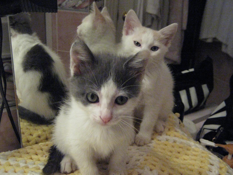 pastel&gümüş(our cats)