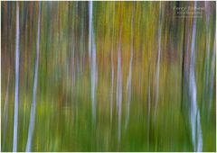 Pastell - Herbst im Moor