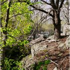 Pastels of Spring along the Great Falls Overlook Trail