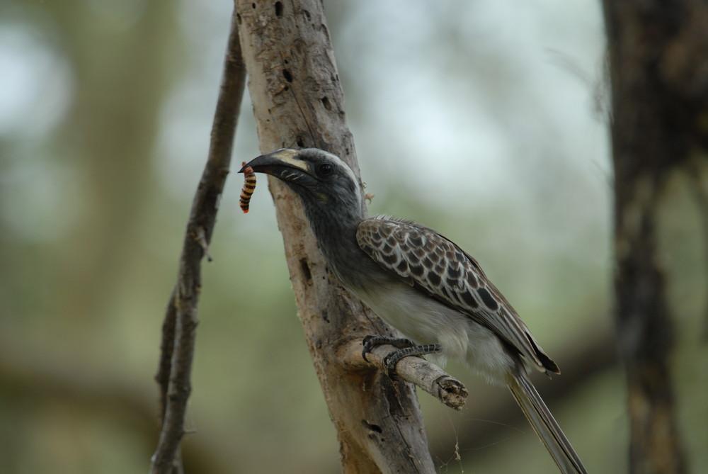 Pasto di un uccello
