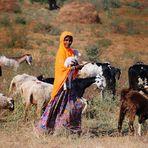 Pastora en India