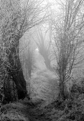 ...path to....