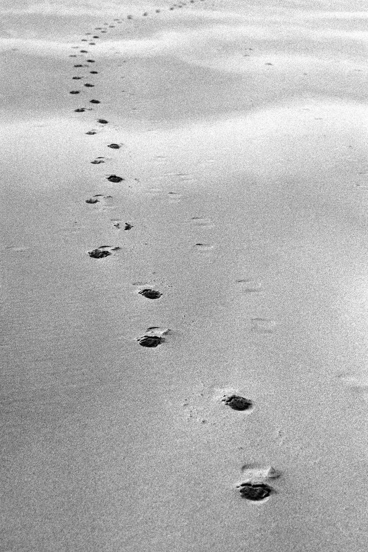 Paths / Prints #17