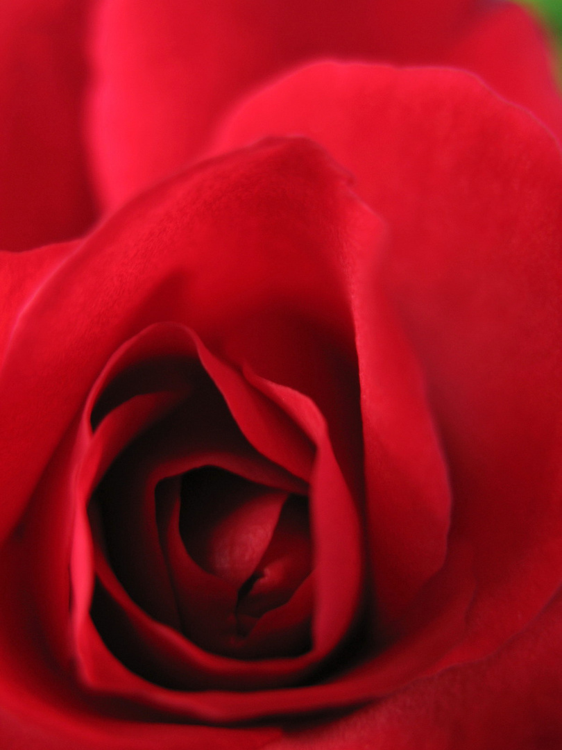 Patterns of Nature - Red Rose