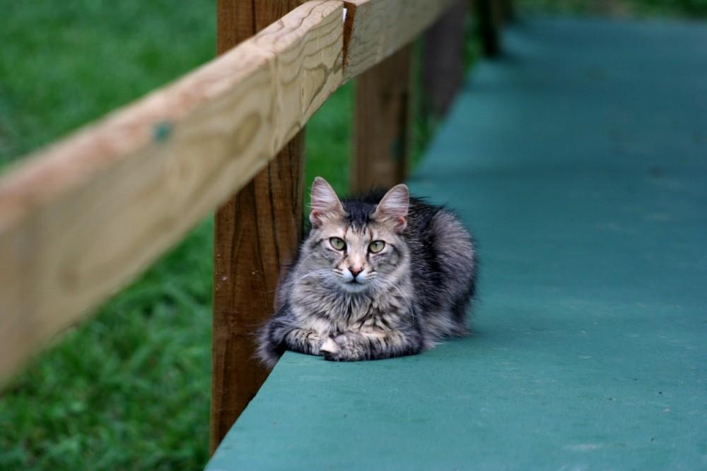 Patti's cat